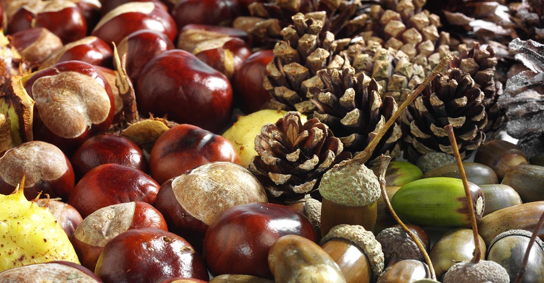 Material zum Herbstbasteln