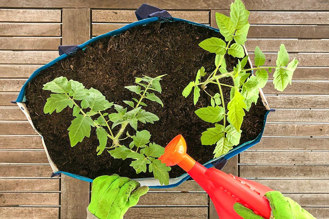Gärtnern mit Kindern: DIY-Pflanztasche