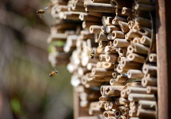 Insektenhotel bauen: Bienen besuchen selbst gebautes Insektenhotel