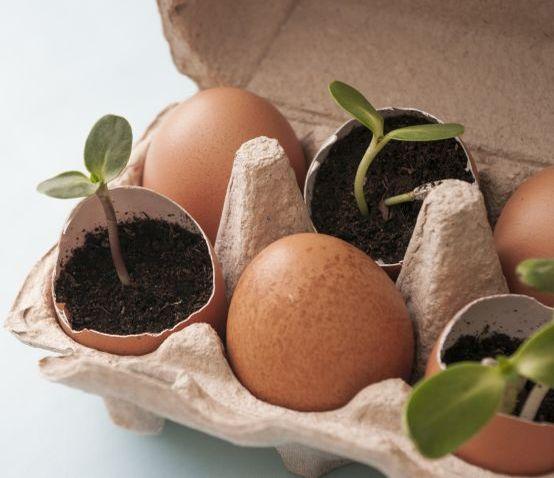 Osterdeko basteln mit Kindern: Pflanzen in Eierschalen züchten